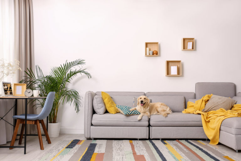 Pet-Proofing Your Home by Room